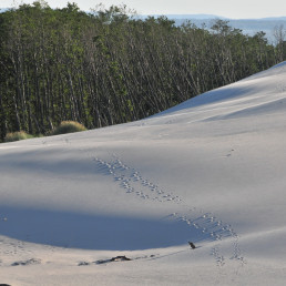 Rabka, Polonia, dunele de nisip